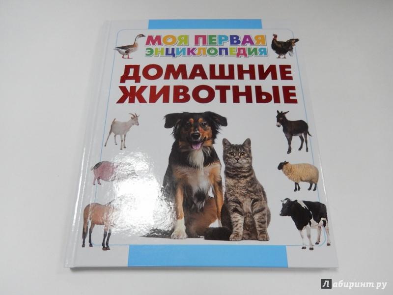 энциклопедия в картинках домашние питомцы горшок