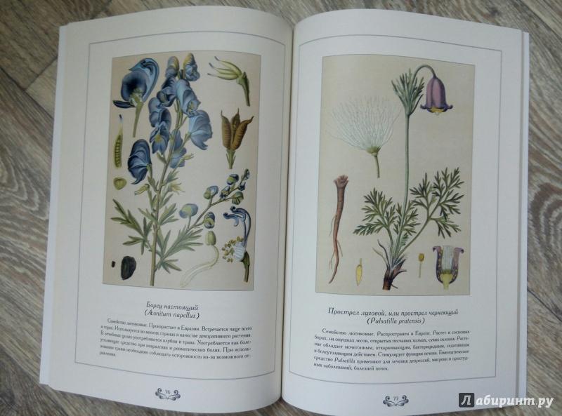 Атлас лекарственных растений с фото