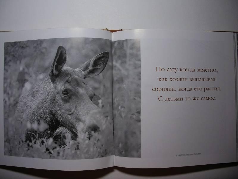 Иллюстрация 1 из 17 для Папочка - классный! Мудрость жизни: Почти все об отцовстве   Лабиринт - книги. Источник: Tiger.