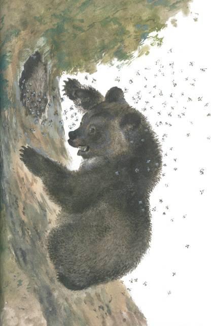 вот иллюстрации к рассказам чарушина медвежонок щитовой, годен