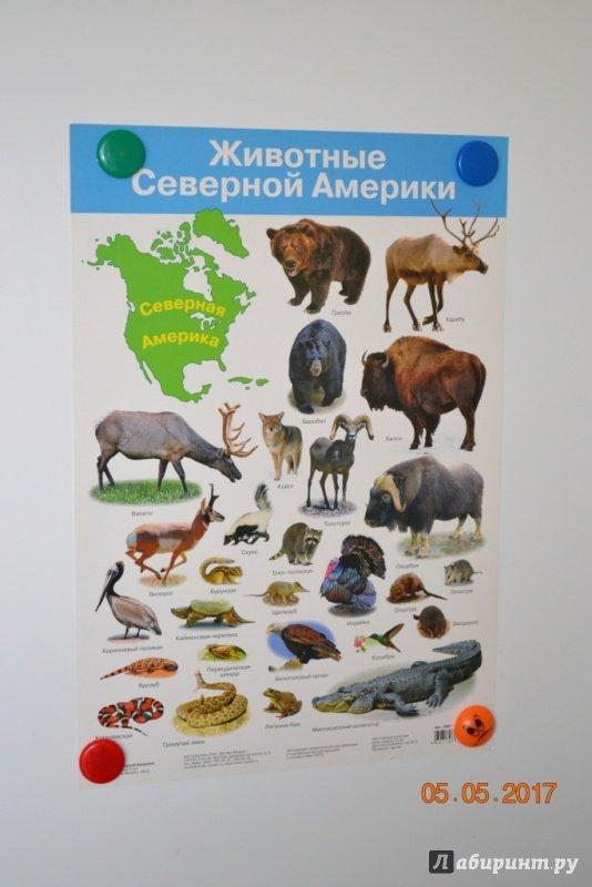 Картинки какие животные живут в северной америке