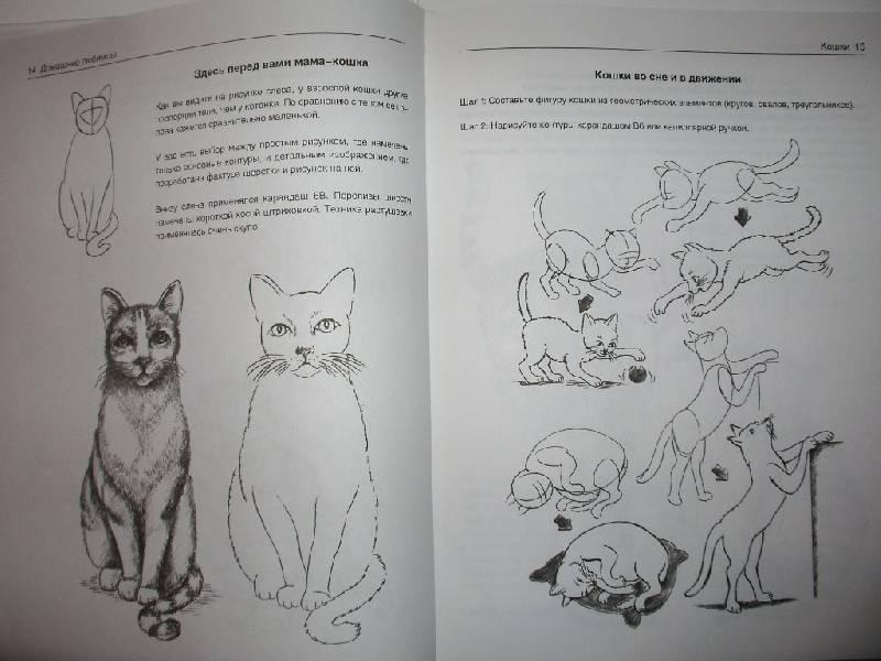 Иллюстрация 11 из 21 для Рисуем животных - Вальтер Хальбингер | Лабиринт - книги. Источник: Tiger.