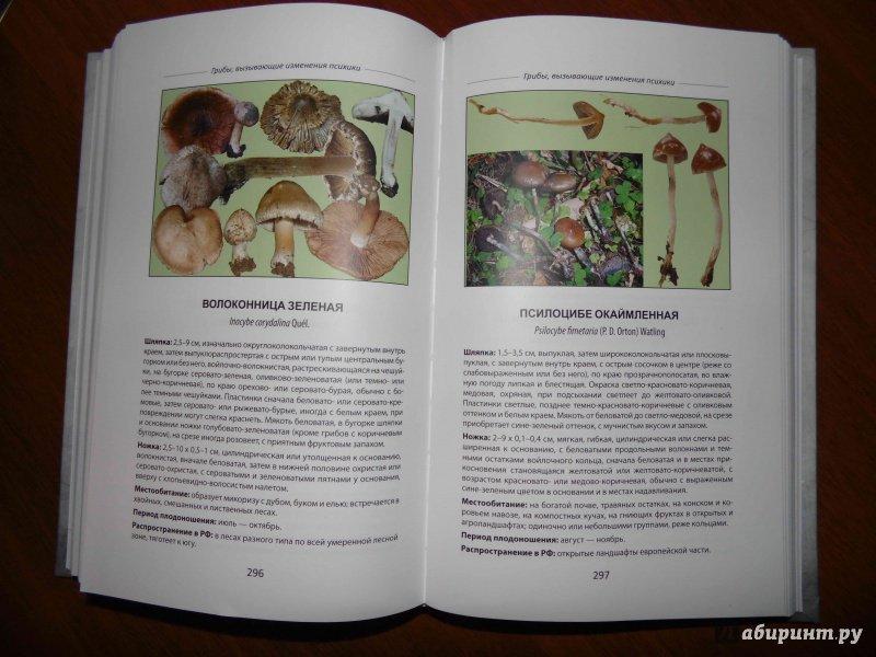 Иллюстрация 17 из 18 для Ядовитые грибы России - Михаил Вишневский   Лабиринт - книги. Источник: Прохорова  Наталья
