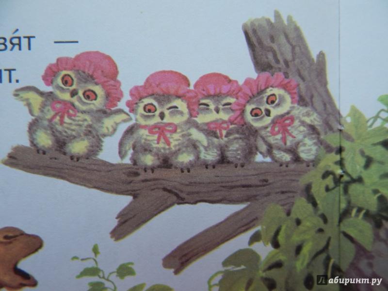 Маленькие совята картинки маршак