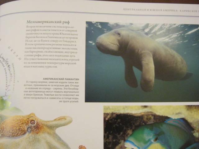 Иллюстрация 63 из 88 для Животный мир. Иллюстрированный атлас - Бамбарадения, Вудрафф, Гинзберг | Лабиринт - книги. Источник: М-и-л-е-н-а