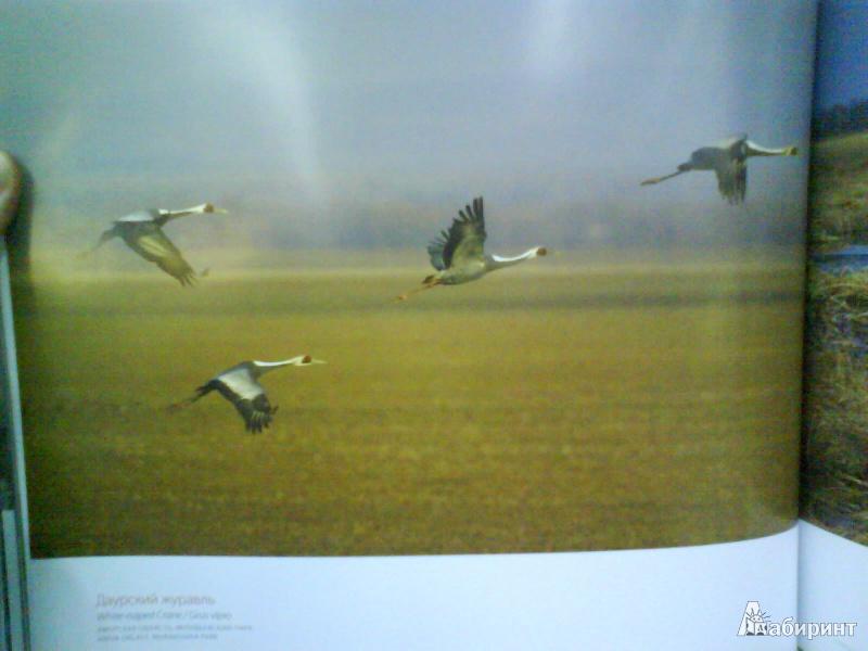 Иллюстрация 6 из 14 для Птицы России - Валерий Малеев   Лабиринт - книги. Источник: Мила