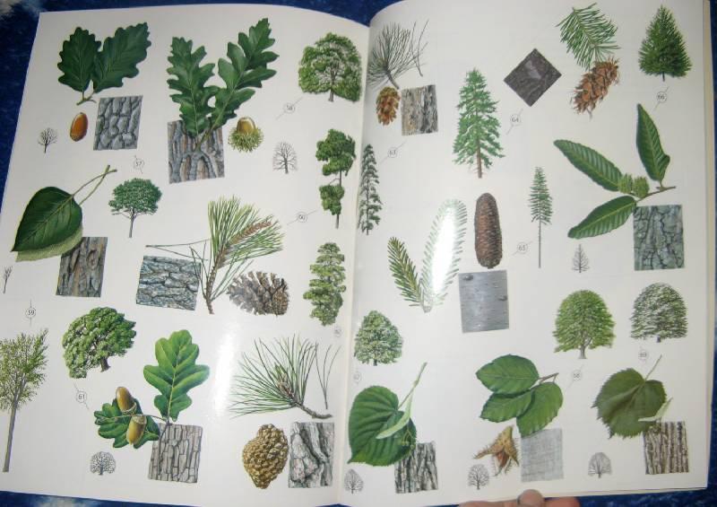 Иллюстрация 1 из 11 для Деревья: Атлас с наклейками (100 наклеек) - Джейн Чисхольм | Лабиринт - книги. Источник: ilamtel