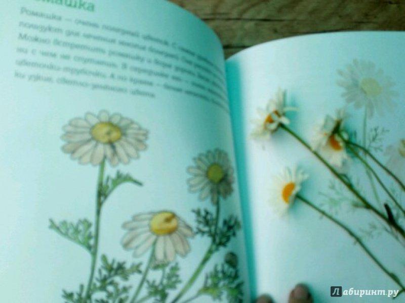 Иллюстрация 18 из 28 для Мой первый гербарий. Цветы и листья. ФГОС | Лабиринт - книги. Источник: peperin