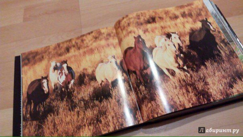 Иллюстрация 3 из 25 для Лошади. Самые лучшие фотографии   Лабиринт - книги. Источник: @СеребряноеТысячелетие