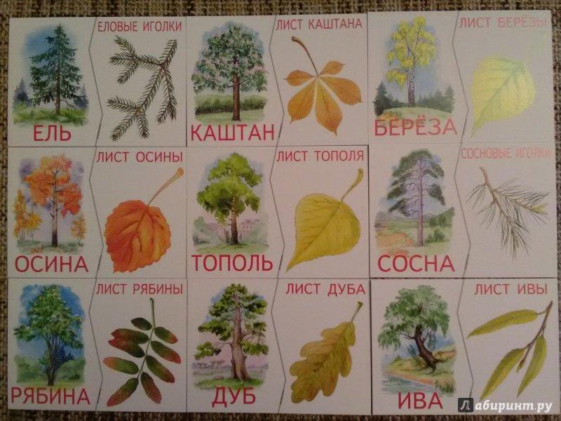 ценами украшение виды деревьев в картинках их листья земляные пауки, так