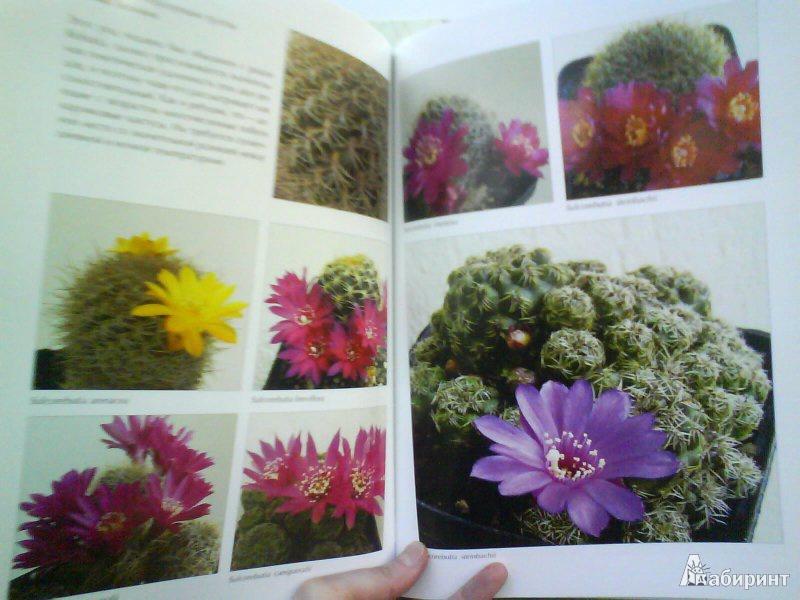 Иллюстрация 3 из 4 для Мои кактусы: Руководство по уходу за кактусами и другими суккулентами для всех любителей растений - Хельга Мозес   Лабиринт - книги. Источник: Мила