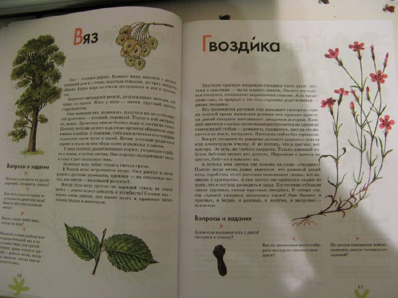 Иллюстрация 6 из 16 для Азбука. Растения России: книга для чтения детям - Инна Шустова | Лабиринт - книги. Источник: Осень-рыжая подружка.