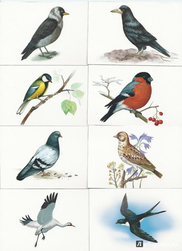 Птицы которые прилетели весной демонстрационный материал для детей доу