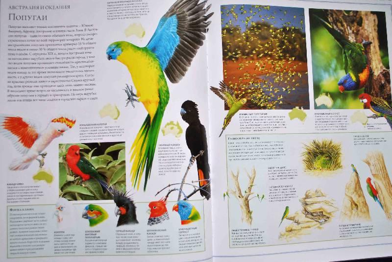 Иллюстрация 53 из 88 для Животный мир. Иллюстрированный атлас - Бамбарадения, Вудрафф, Гинзберг | Лабиринт - книги. Источник: Тамар@