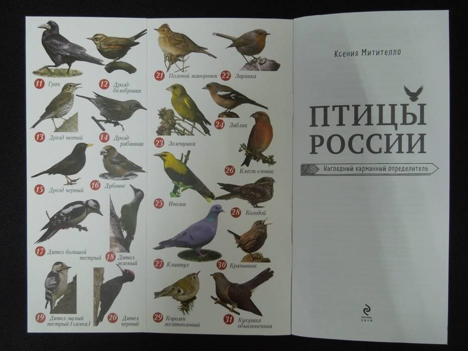 справочник птиц с картинками