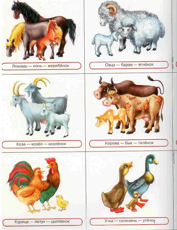 Домашние животные и детеныши картинки для детей