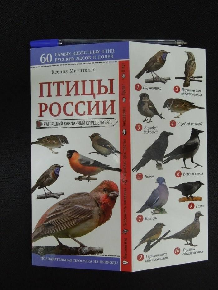 чеснок вкусу, атлас птицы подмосковья фото с названиями платёжная система вид