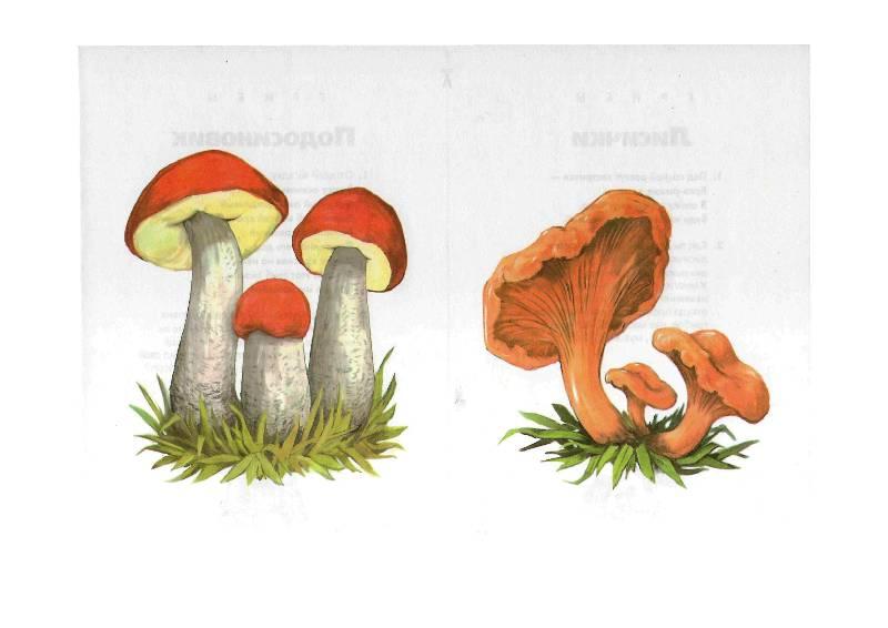 так разрезные картинки гриб дети собирались