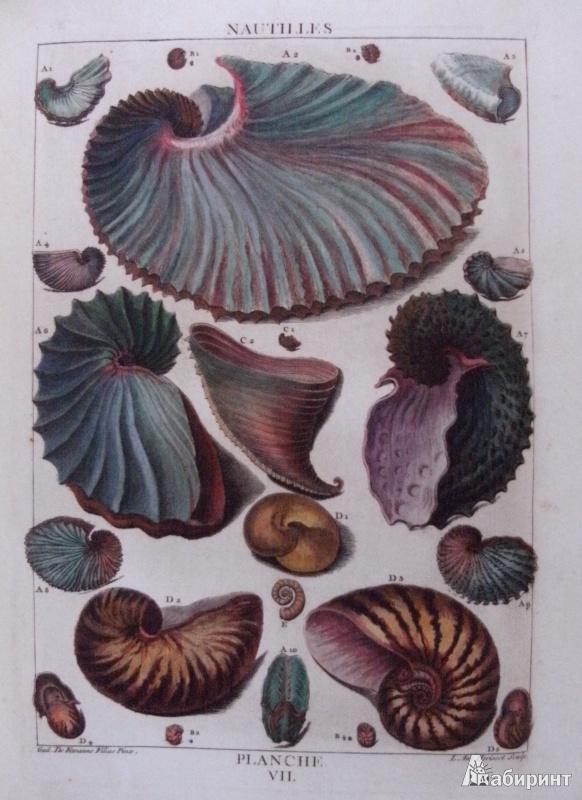 Иллюстрация 7 из 12 для Shell - Muscheln - Coquillages - Carpita, Willmann, Willmann | Лабиринт - книги. Источник: Комаров Владимир