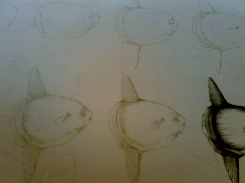 Иллюстрация 28 из 29 для Рисуем 50 акул, китов и других морских животных - Эймис, Бадд | Лабиринт - книги. Источник: Юлия7