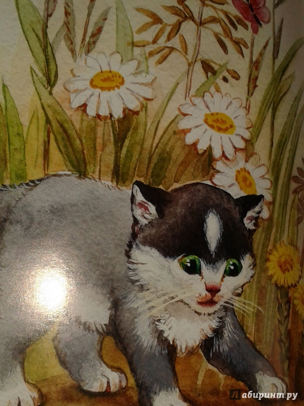 толстой котенок картинка фотоаппарат позволяет