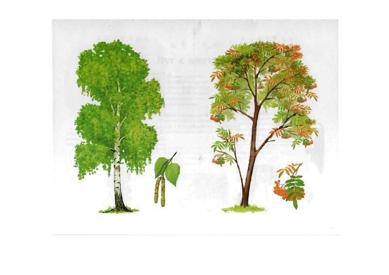 разнообразие картинки деревьев для начальных классов пробовала