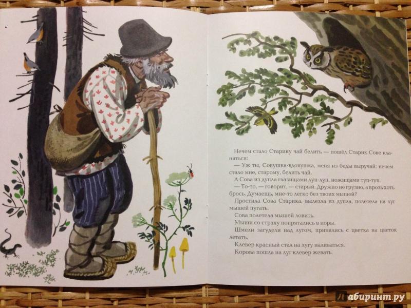Иллюстрация 22 из 36 для Сова - Виталий Бианки | Лабиринт - книги. Источник: Транжира