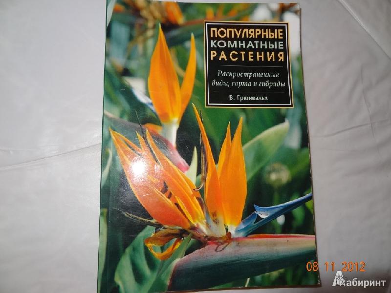 Иллюстрация 1 из 20 для Популярные комнатные растения: распространенные виды, сорта и гибриды - Вальтер Грюнвальд   Лабиринт - книги. Источник: Marti2007