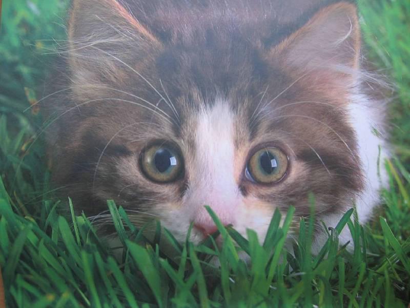 Иллюстрация 1 из 6 для Календарь. 2010 год. Котята (70905) | Лабиринт - сувениры. Источник: Red cat ;)