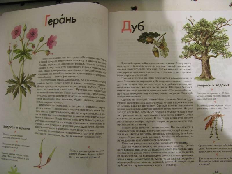 Иллюстрация 7 из 16 для Азбука. Растения России: книга для чтения детям - Инна Шустова | Лабиринт - книги. Источник: Осень-рыжая подружка.
