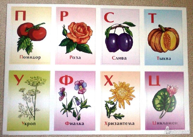 цветочная азбука в картинках задачей было