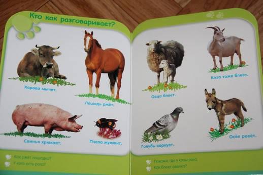 Иллюстрация 6 из 8 для Жизнь животных (от 3-х лет) | Лабиринт - книги. Источник: Vilvarin  Laurea