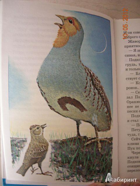Иллюстрация 22 из 25 для Тайна ночного леса - Виталий Бианки | Лабиринт - книги. Источник: Honeyed