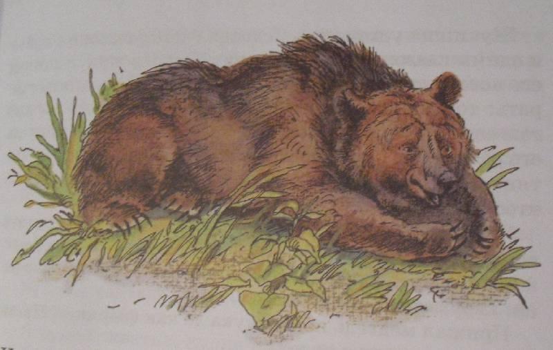Картинки к рассказу медведь-дармоед