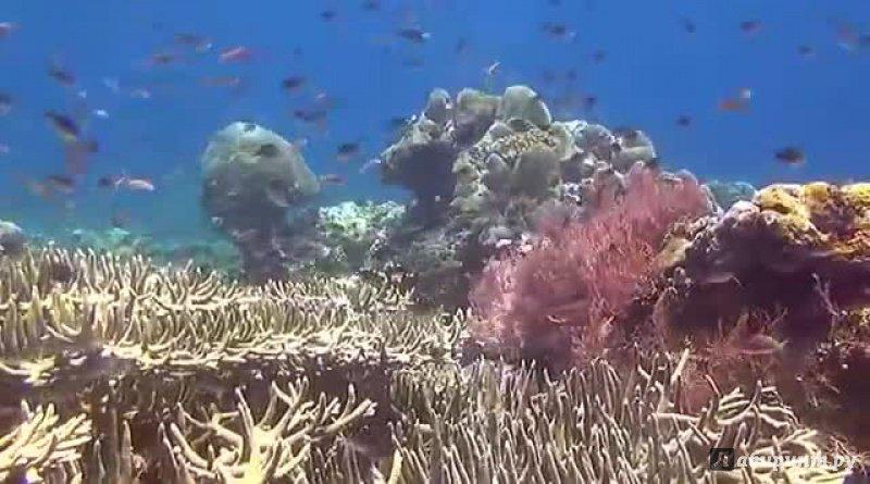 Иллюстрация 9 из 10 для Папуа: секретный остров каннибалов 3D (Blu-Ray) - Питер Лорд | Лабиринт - Источник: noname