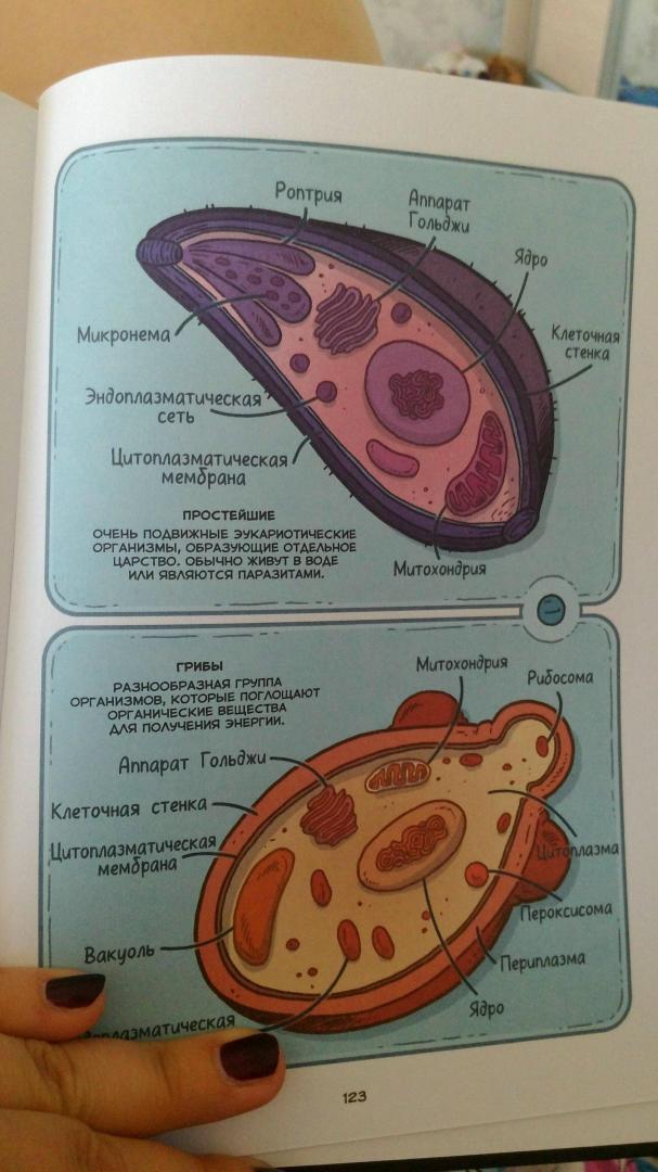 Иллюстрация 22 из 31 для Вирусы и микробы. Научный комикс - Фалинн Кох | Лабиринт - книги. Источник: Бочкарева Анастасия