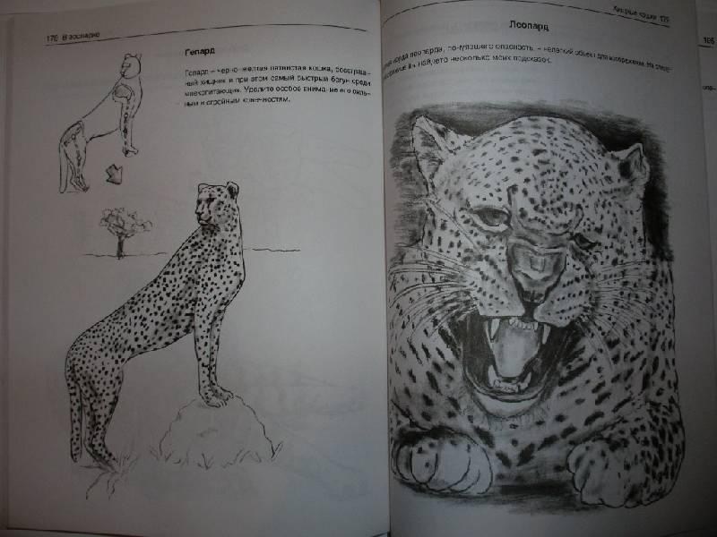 Иллюстрация 21 из 21 для Рисуем животных - Вальтер Хальбингер | Лабиринт - книги. Источник: Tiger.