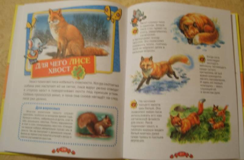 Иллюстрация 10 из 19 для Удивительные животные - Татьяна Комзалова | Лабиринт - книги. Источник: Tatka