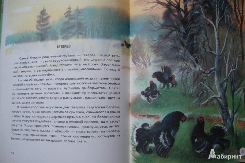 Иллюстрация 4 из 41 для Азбука живой природы - Александр Барков | Лабиринт - книги. Источник: Еремеева  Ольга