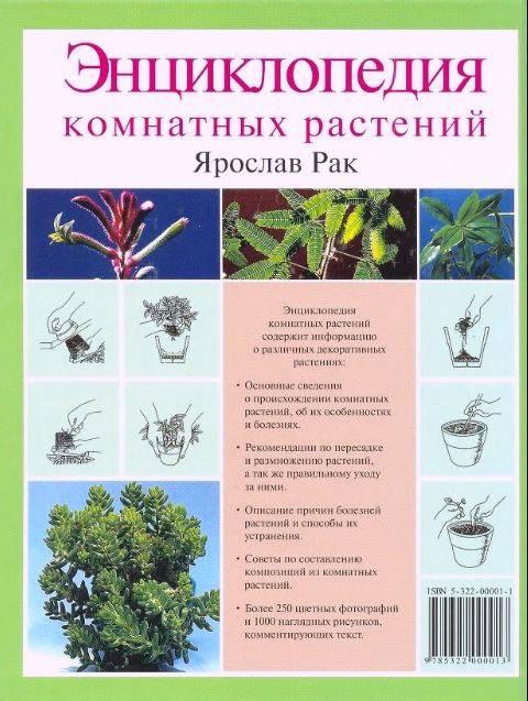 юбки комнатные растения энциклопедия с картинками набивать тату