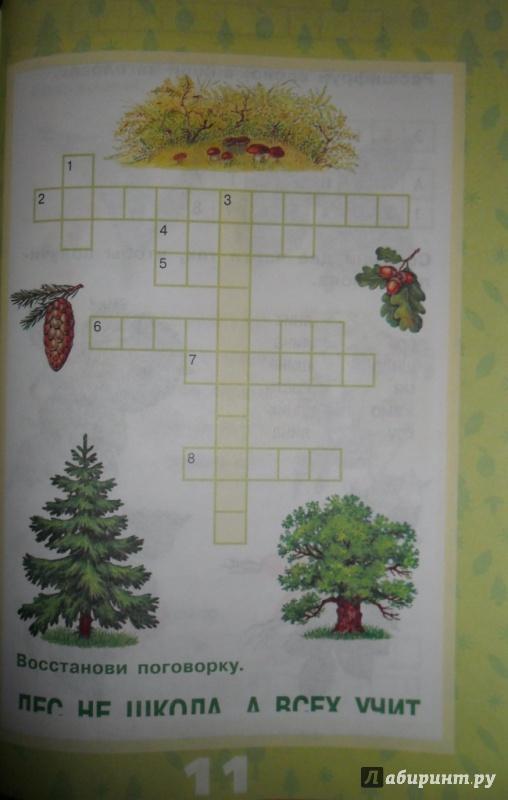 Иллюстрация 7 из 17 для Растения леса - Ольга Тишурина | Лабиринт - книги. Источник: Наталья