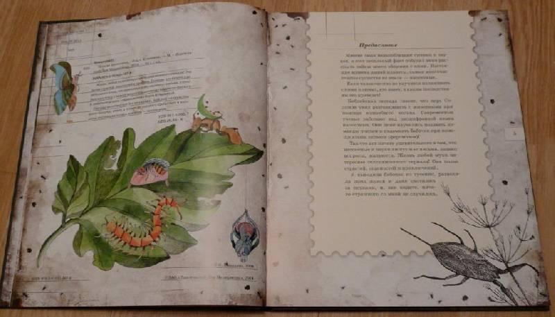 Иллюстрация 7 из 106 для Письма насекомых - Ольга Кувыкина | Лабиринт - книги. Источник: Pam