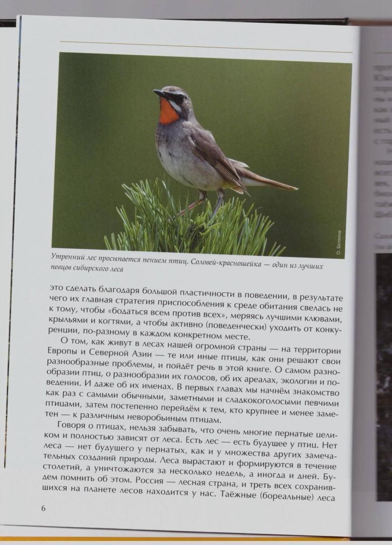 Иллюстрация 28 из 51 для Лесные птицы России - Константин Михайлов | Лабиринт - книги. Источник: LanaEr
