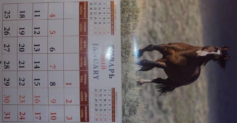 Иллюстрация 1 из 15 для Календарь. 2010 год. Лошади (70903) | Лабиринт - сувениры. Источник: KOK