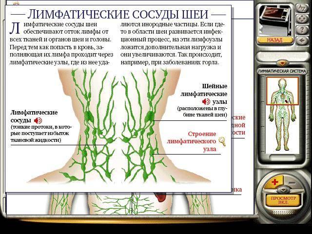 Иллюстрация 25 из 33 для Мое тело. Анатомия и физиология (CDpc) | Лабиринт - софт. Источник: Galia