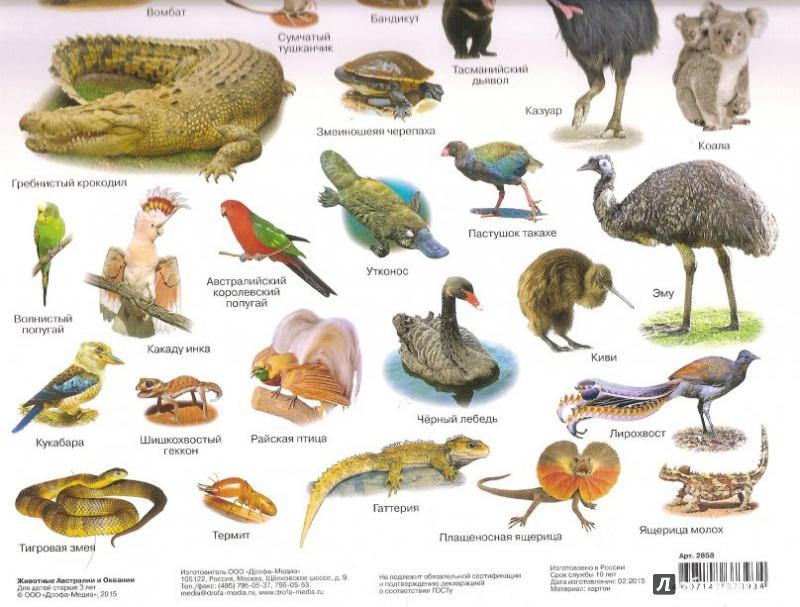 картинки с названиями птиц австралии также