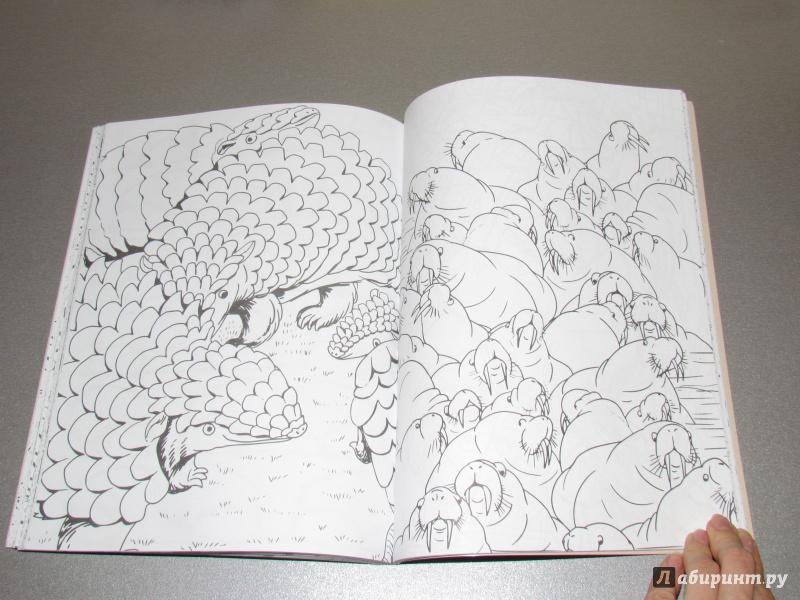 Иллюстрация 58 из 59 для Дикие животные. Раскраска ...