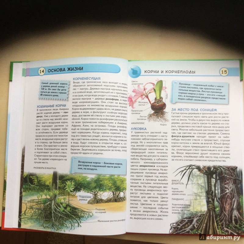 Иллюстрация 16 из 16 для Тропические растения. Удивительная флора жарких стран - Юлия Школьник | Лабиринт - книги. Источник: Светлая