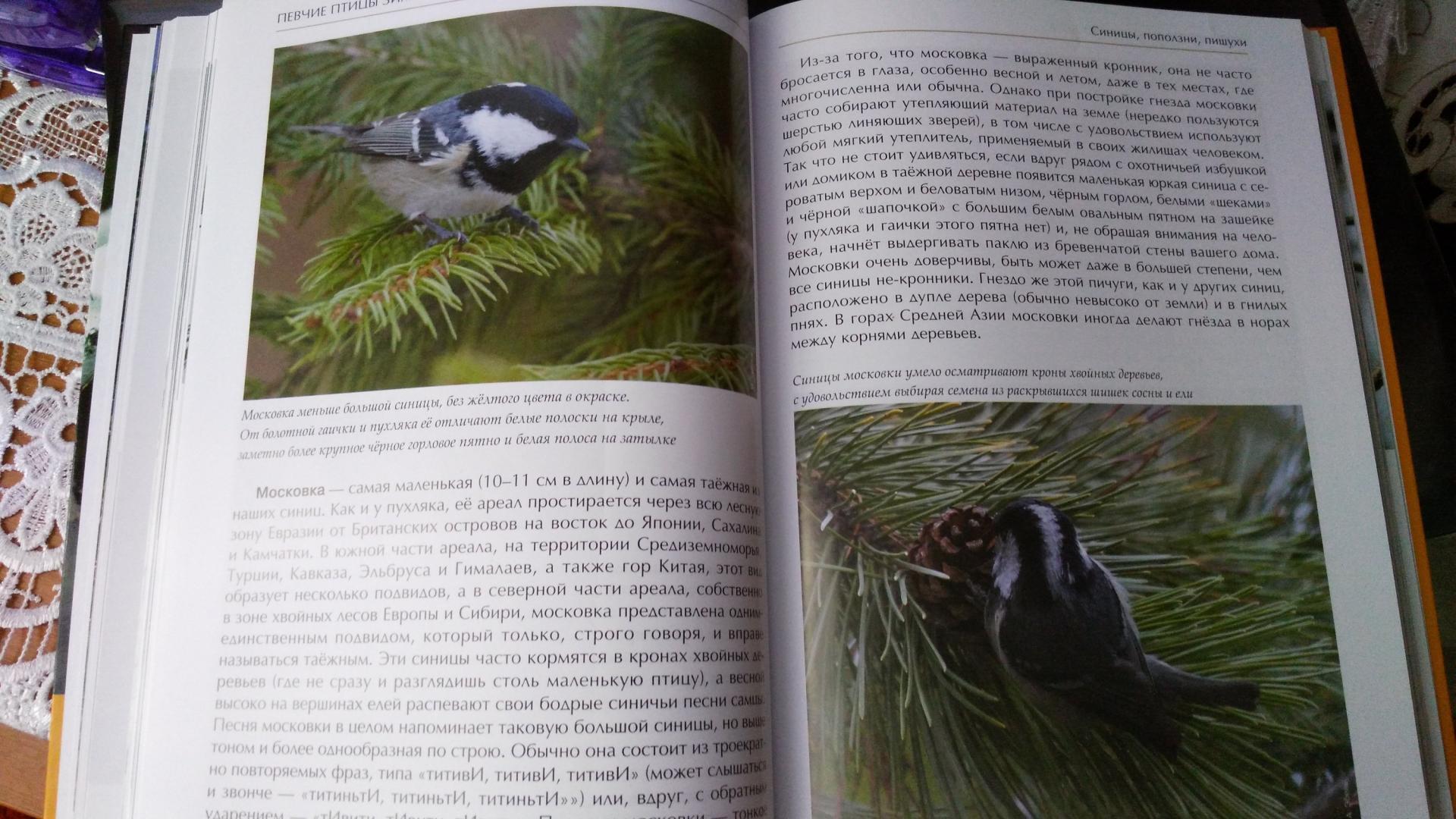 Иллюстрация 12 из 51 для Лесные птицы России - Константин Михайлов | Лабиринт - книги. Источник: Galinka