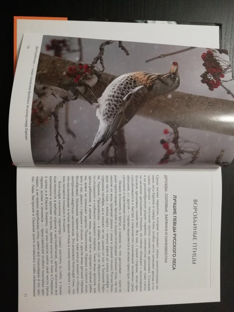Иллюстрация 20 из 51 для Лесные птицы России - Константин Михайлов | Лабиринт - книги. Источник: Дергоусова  Анна Николаевна